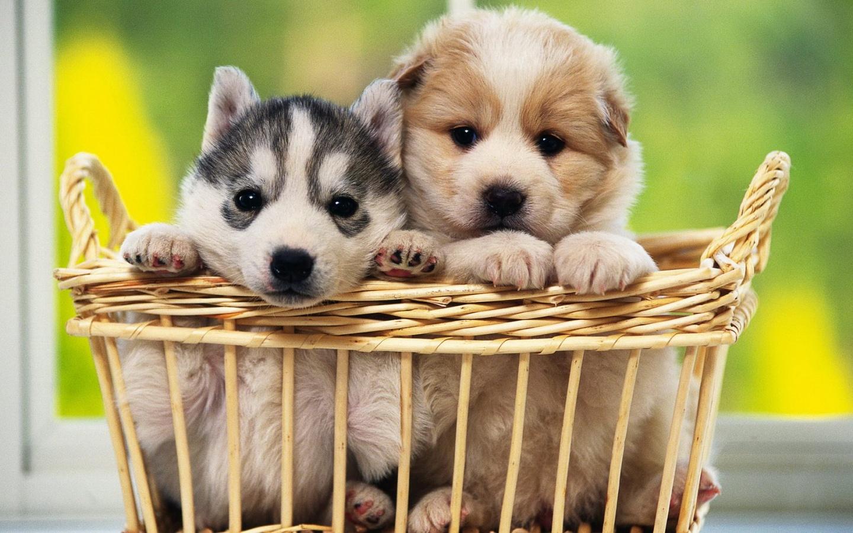 cachorros-tiernos