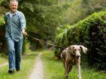 620-man-walking-dog-gain-peace-with-pooch-esp.imgcache.rev1360609199677.web