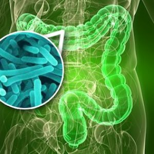la-flora-intestinal
